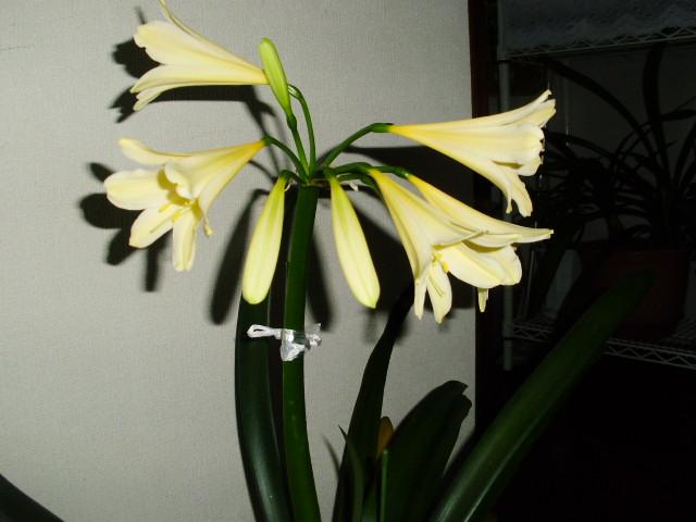 20080101_03_16